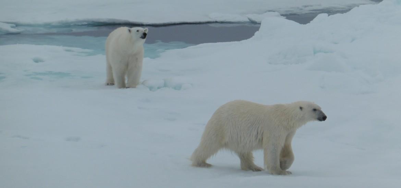 Travel in Arctic Svalbard